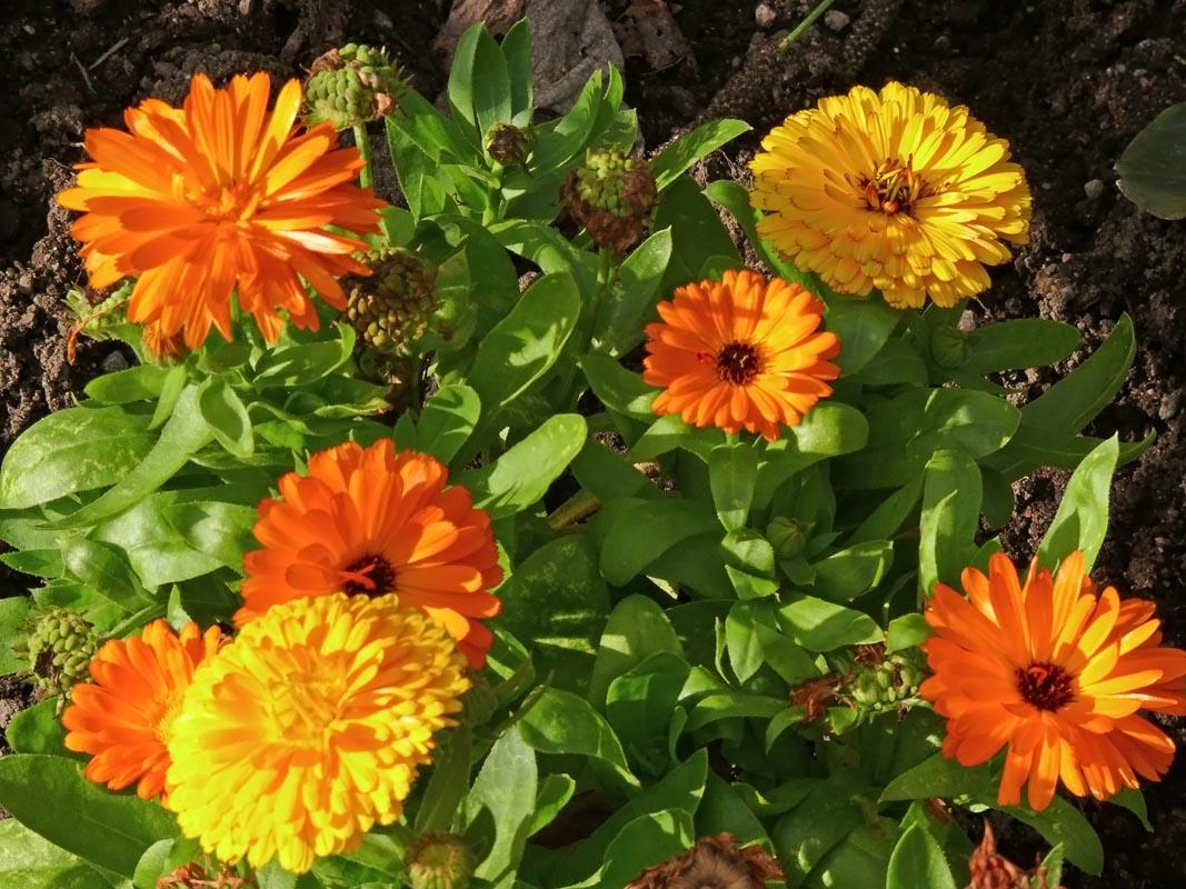 Сад Маримуртра MariMurtra в Испании  одно из самых